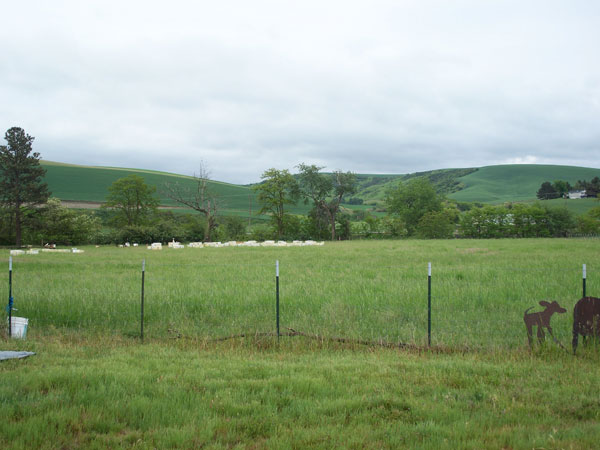 Beehives in Landscape, Monteillet Farm