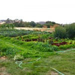 Monteillet Farm Gardens with Garden Hose - Photo by Cameron Riley (Pastry Ninja Photography)