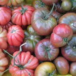 Heirloom Tomatoes - Monteillet Farm Gardens