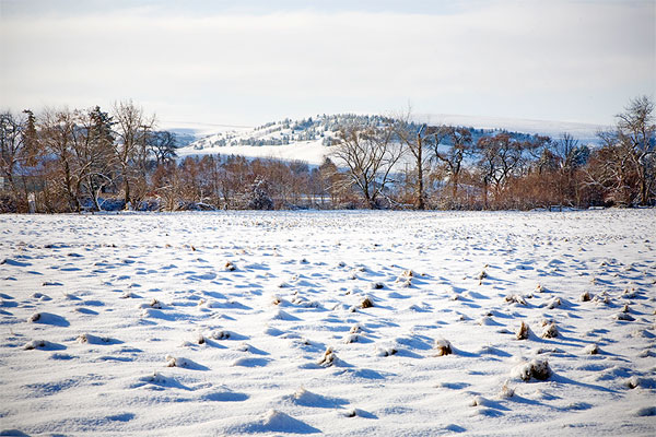 Winter Snow on Fields, Monteillet Fromagerie Photo by Steve Scardina.