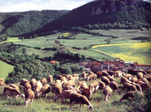 Countryside, Millau, France