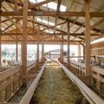 In the New Barn, Monteillet Farm Photo by Steve Scardina