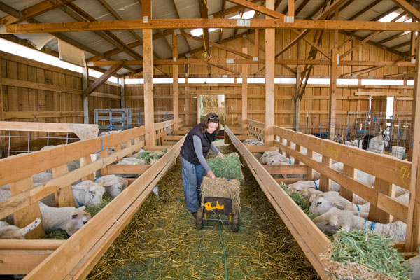 Feeding Time in the New Barn, Monteillet Farm Photo by Steve Scardina