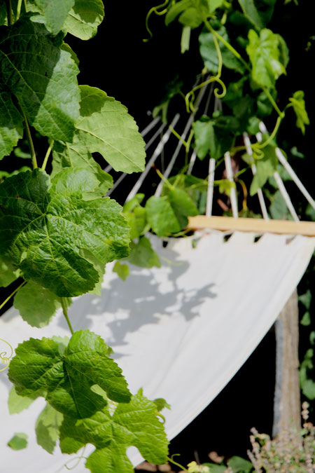 Photo of Hammock in Summer, Monteillet Fromagerie - Photo by Cameron Riley (Pastry Ninja Photography)