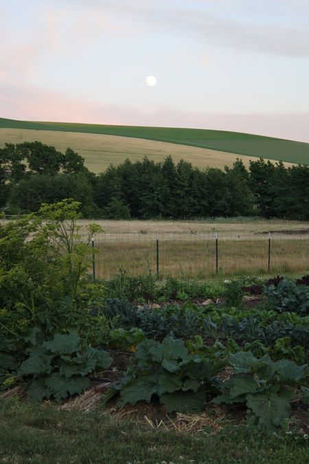 photo of full moon over Nourish Gardens—2011 Outstanding in the Field Dinner—photo by The Farm Chicks